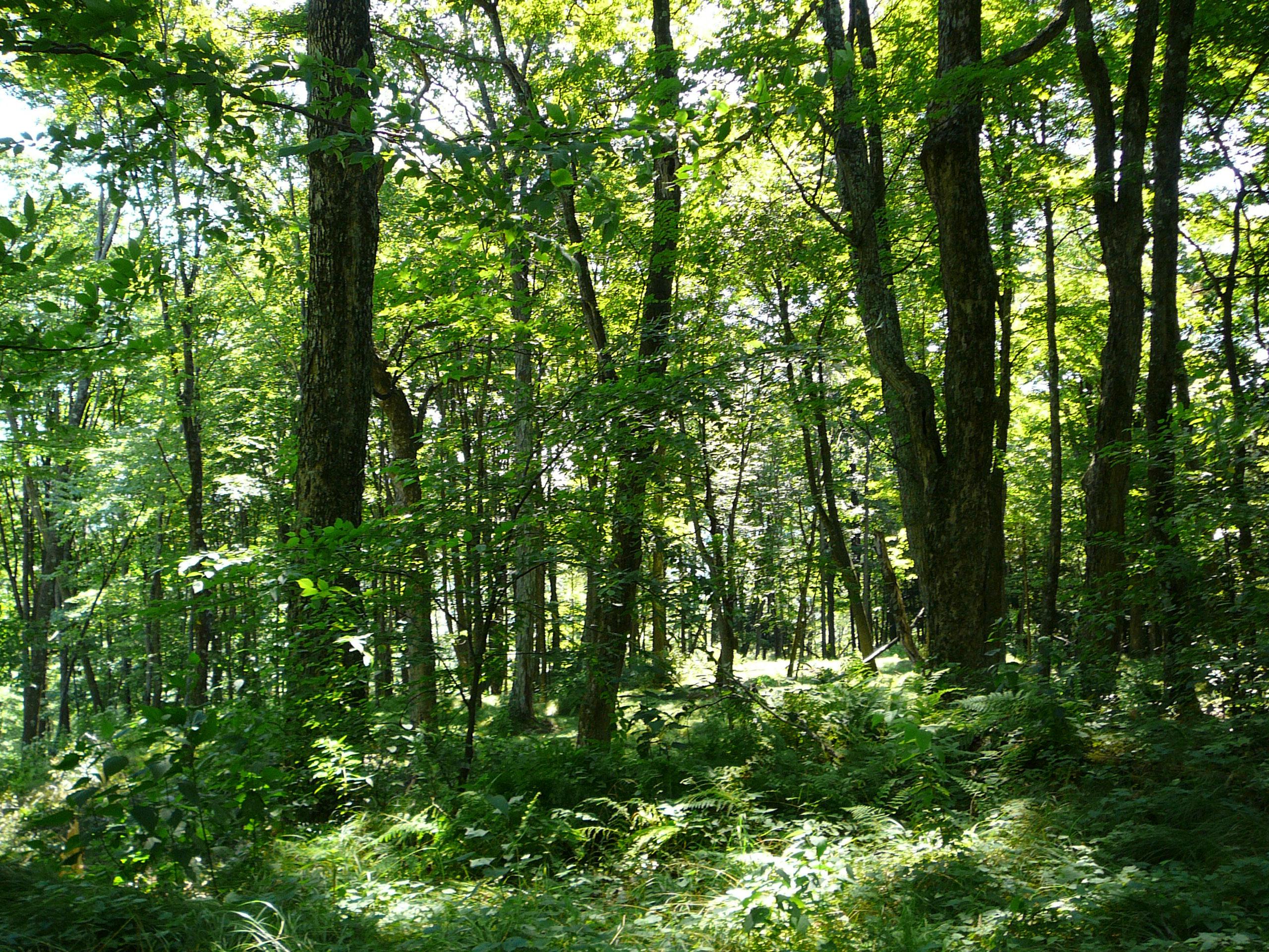 Deer Run Nature Preserve Woods